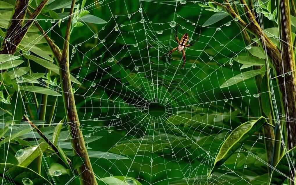 Обережно павуки! Міська дитяча лікарня №5 детская больница Запорожье